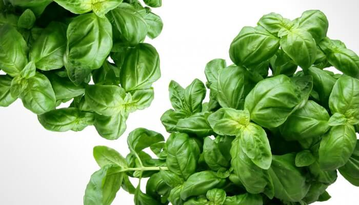 Providing the Best Environment for Your Indoor Herb Garden