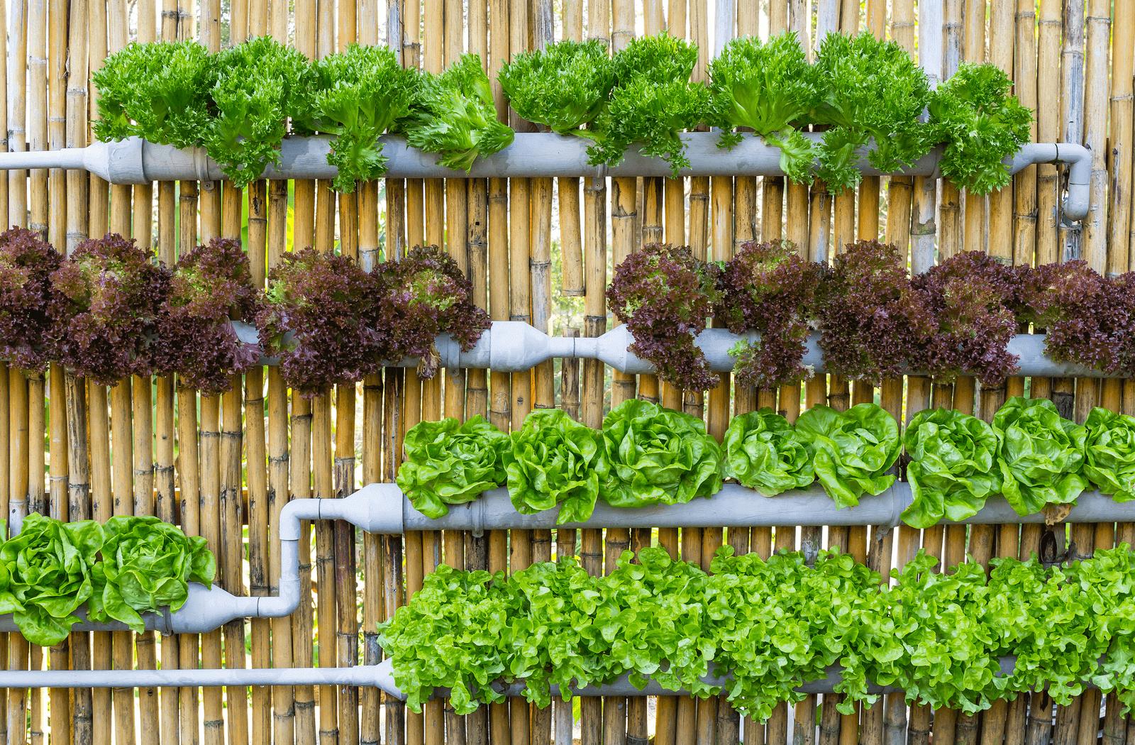Вертикальный огород своими руками с фото