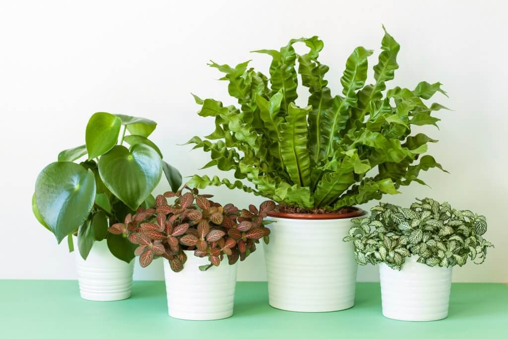 If You Get Stuck With A Houseplant That You Cannot Identify And The Thing  Starts To Die, You Are Really In Trouble. The Trouble Is, Unless You Can  Identify ...