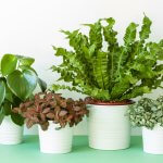 Houseplant Identification Tips