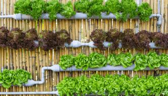 Hydroponic Gardening Explained