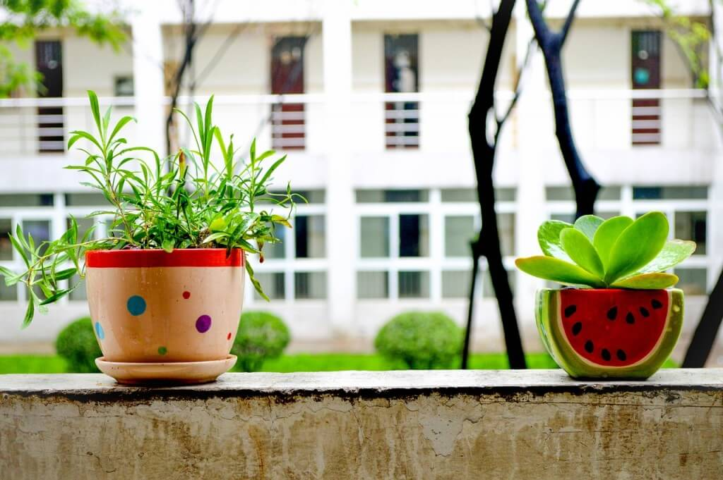 Why do houseplants need light?